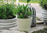 3 Amazing Reasons To Use Planter Boxes In Your Garden